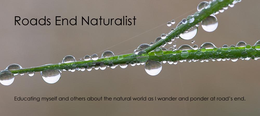 Roads End Naturalist