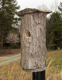 Bluebird nest box made with hollow log