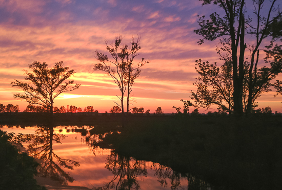 Sunset at Pocosin Lakes NWR