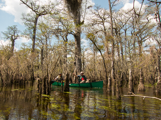 The Jerry's paddle the Three Sisters Swamp.