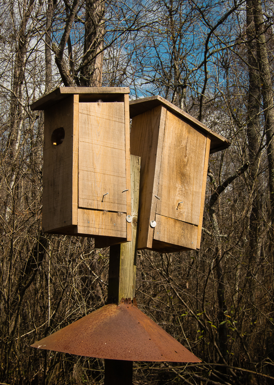 build wood duck box
