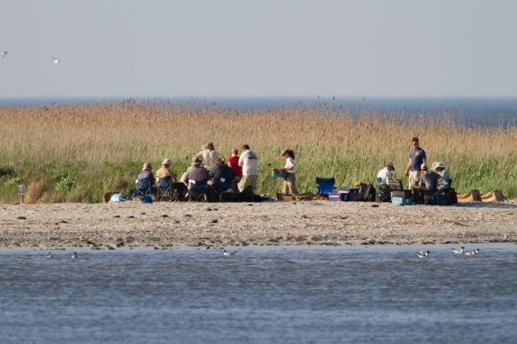 Researchers processing captured shorebirds