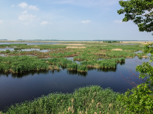 View from observation tower at Bombay Hook NWR