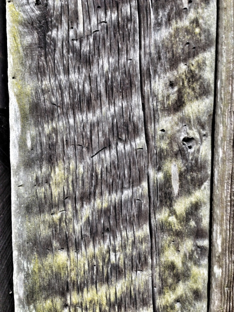 Rough sawn board on Palmer barn