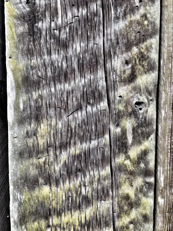 Rough sawn board on Palmer barn
