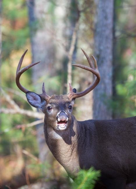 Buck challenges me