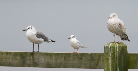 Gulls at the bar