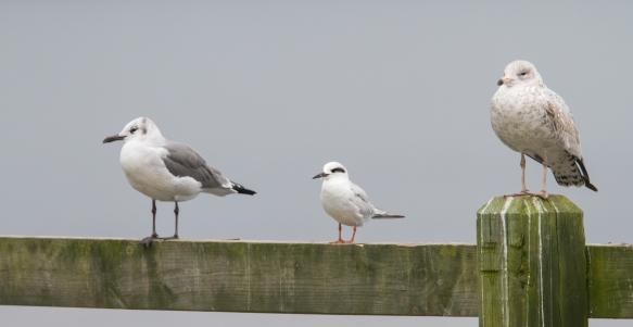 Gulls at the bar