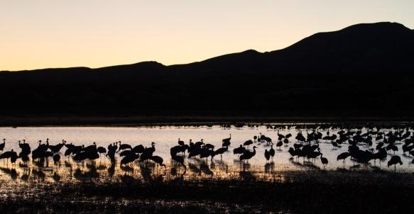 Crane Pond at sunset