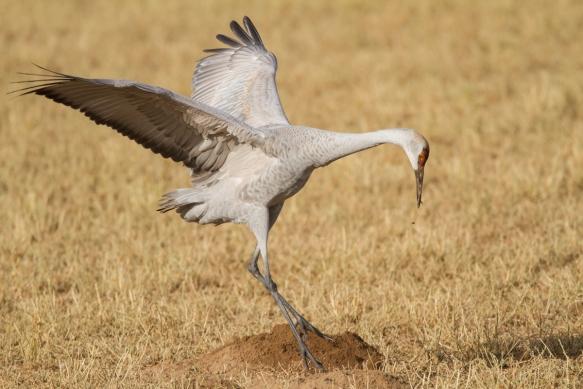 Crane probing dirt mound