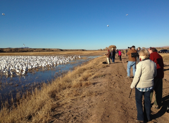 People watching Snow Geese