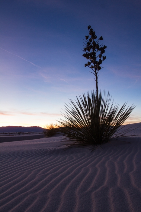 White Sands National Monument 25