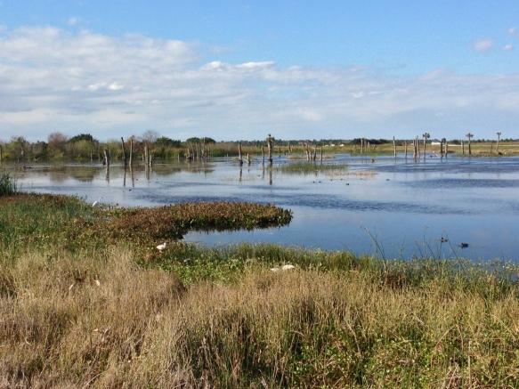 Viera Wetlands habitat 1