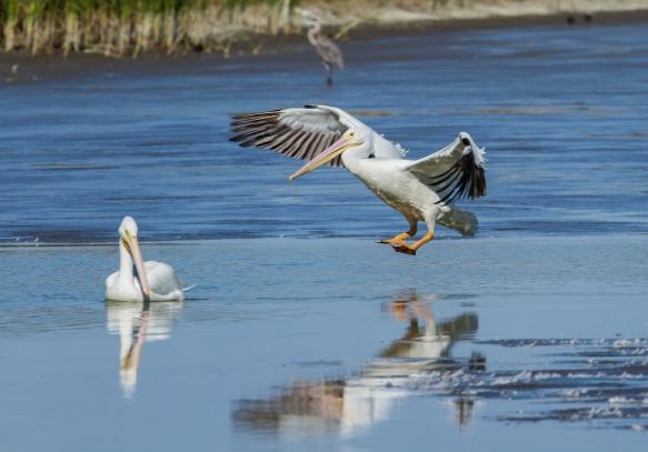 white pelican landing approach