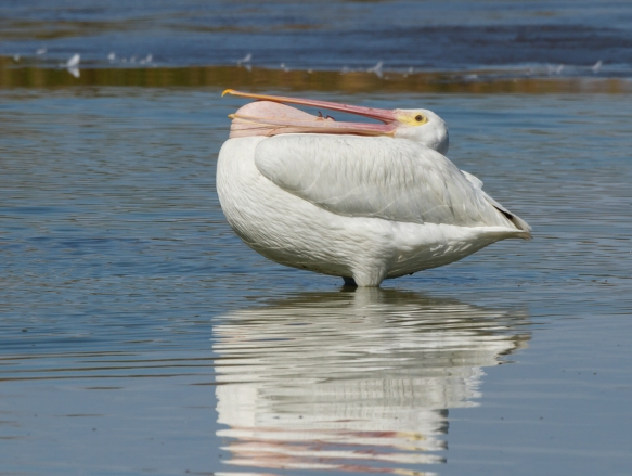 white pelican pouch stretch 2