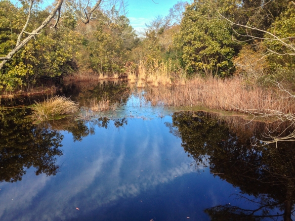 Canal reflections 1