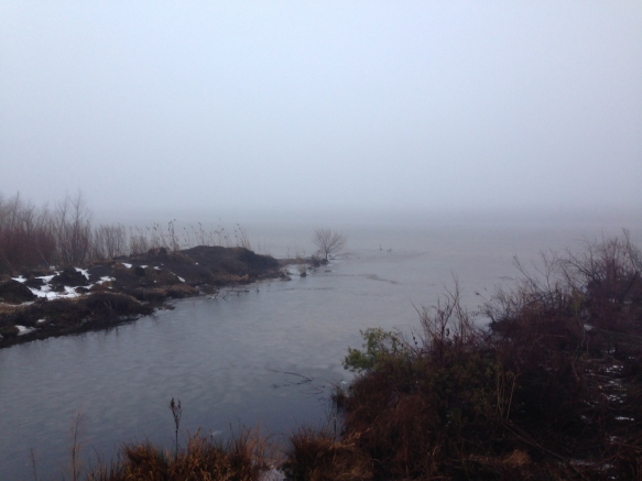 Fog at Pungo Lake
