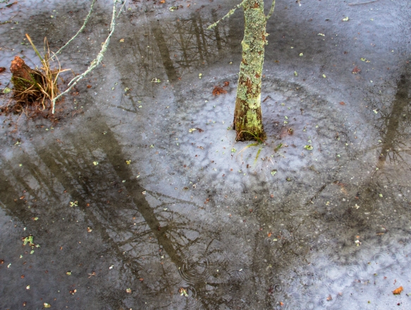 Frozen swamp with ice circle