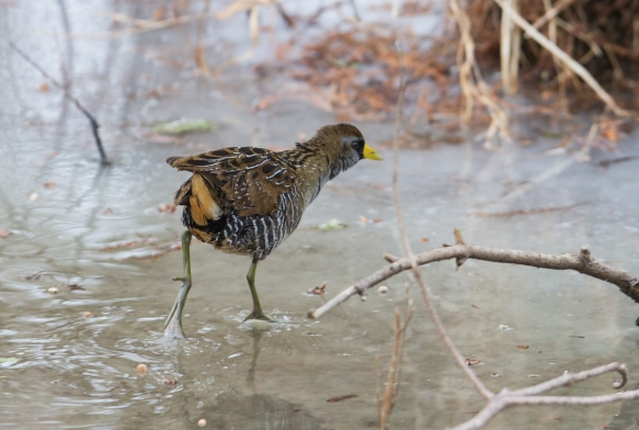 Sora Rail on ice 1