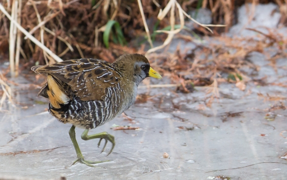 Sora Rail on ice 2
