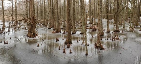 swamp pano