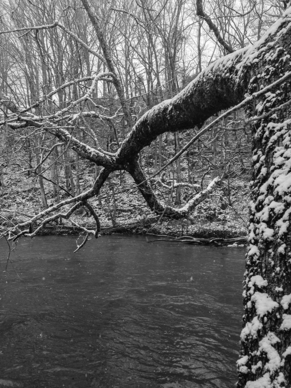 Leaning tree along South Fork of Holston River