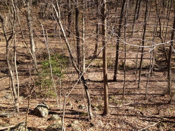 Open Piedmont woods