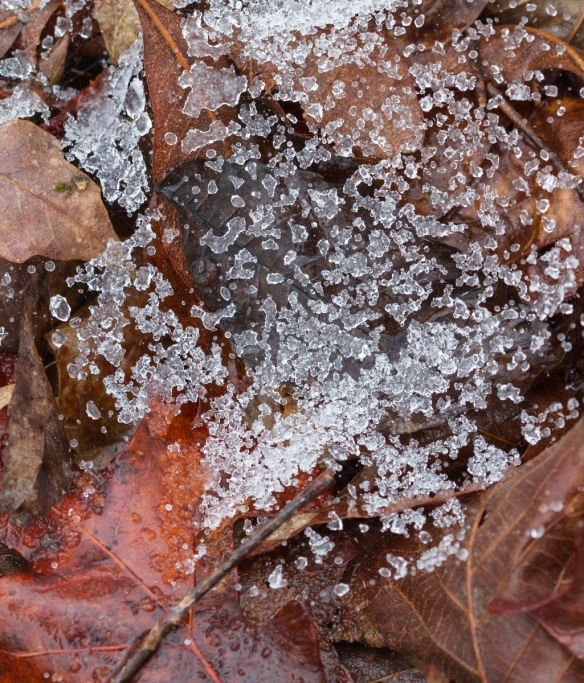 Spider web with ice pellets 1