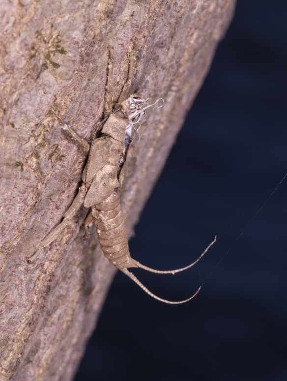 Stonefly shed 1
