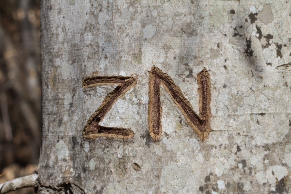 Tree graffitti