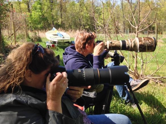 "The Dutch photo brigade ""stalking"" Bluebirds"