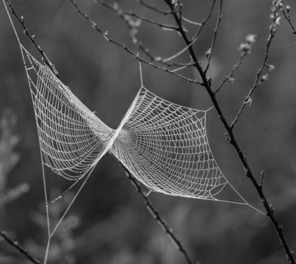 spider web in fog 1