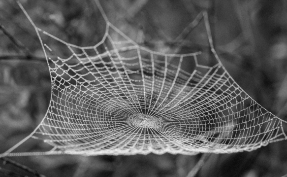 spider web in fog 2