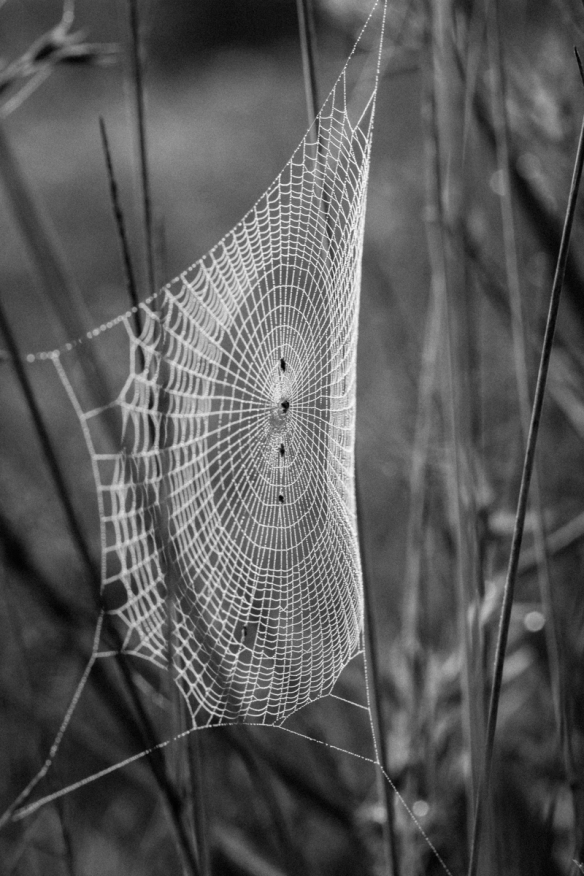 spider web in fog 3