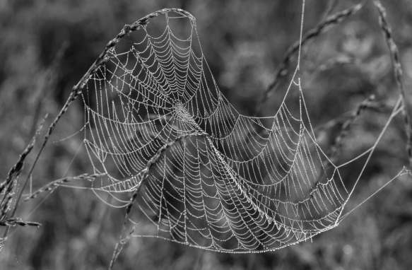 spider web in fog 5