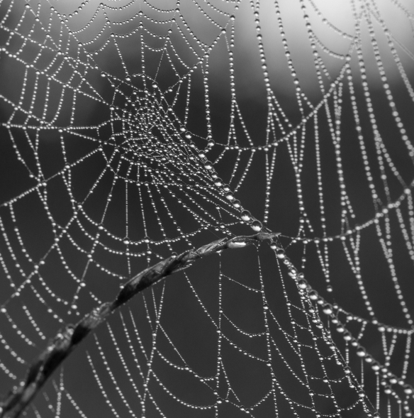 spider web in fog 6