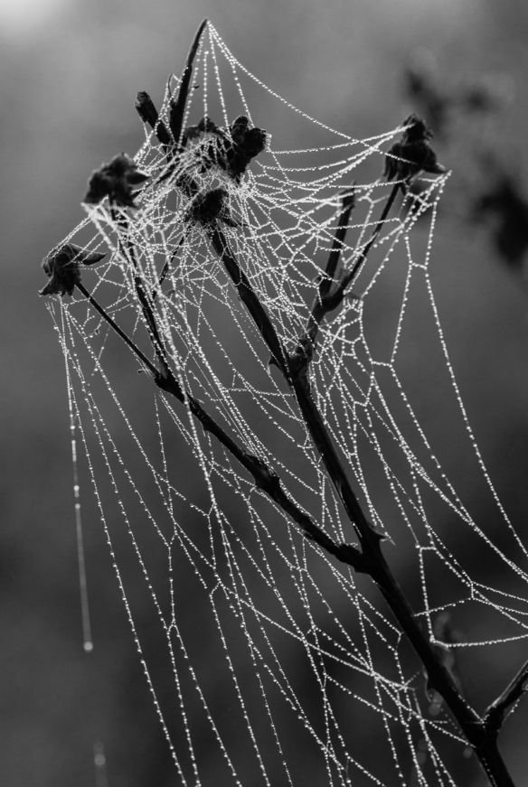 spider web in fog 9