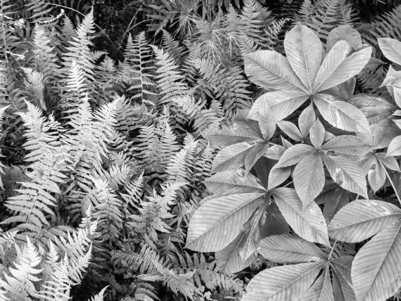 Trailside plants at Glen Alton