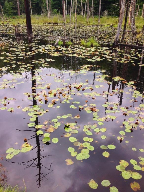 wetlands at Glen Alton