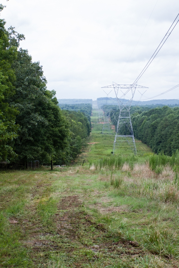 power line after clearing
