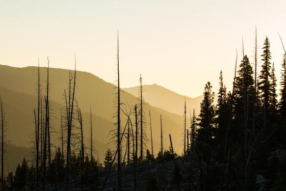 Deer Park at sunset