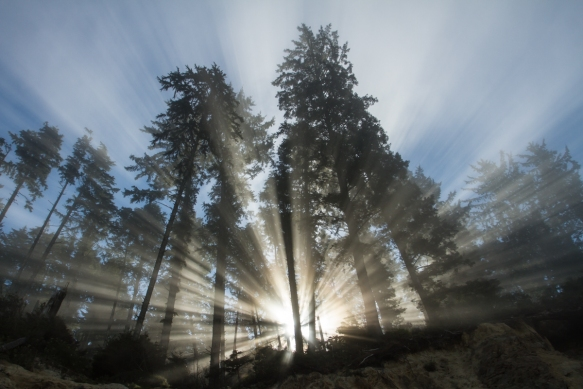 Fog in forest 3