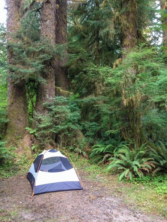 Queets campsite