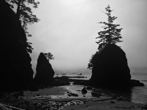 sea stack in cove B and W