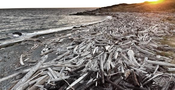 South Beach drfitwood piles