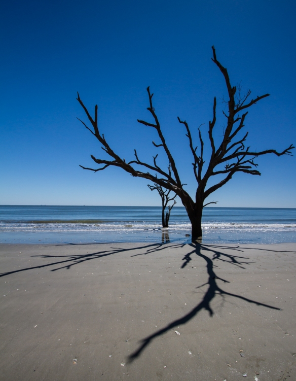 Dead tree at Botany Bay