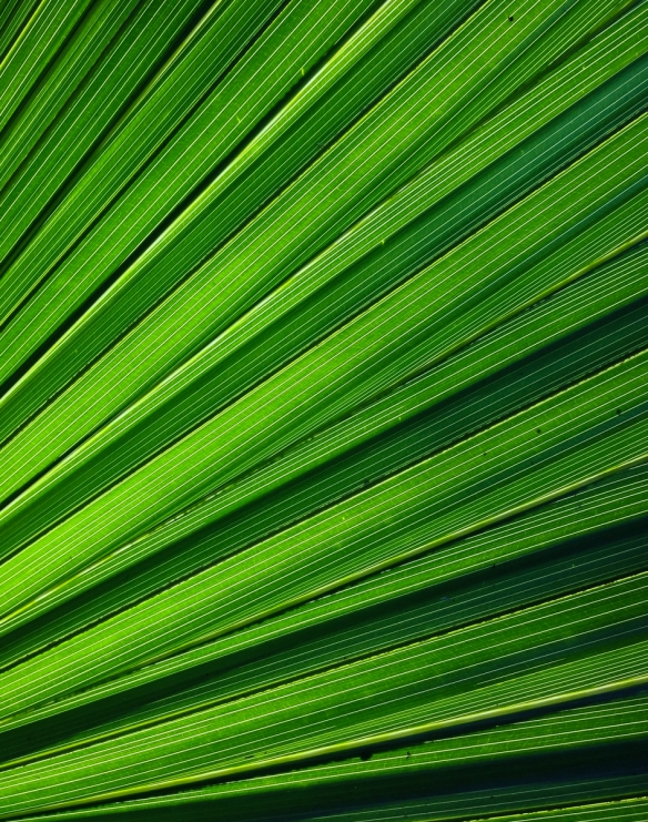 Palm leaf patterns