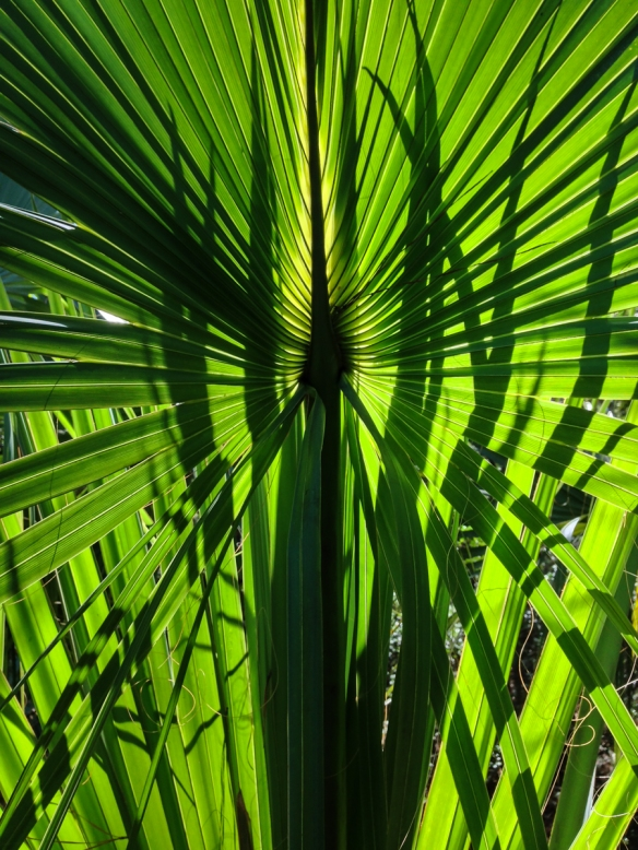 Palmetto leaves and shadows
