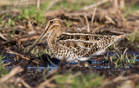 Snipe camouflage 1