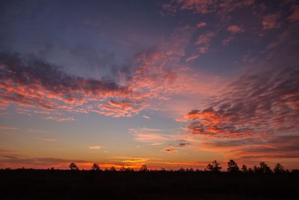 Sunrise at Pungo Lake